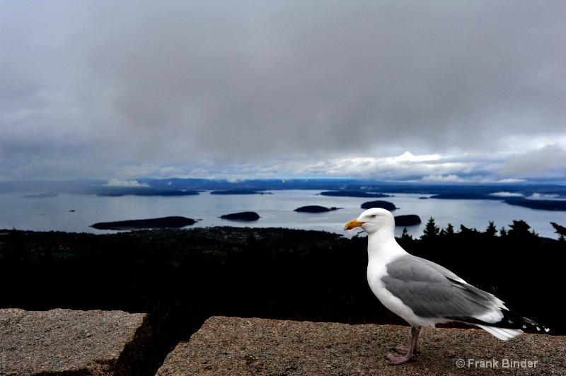A birds eye view