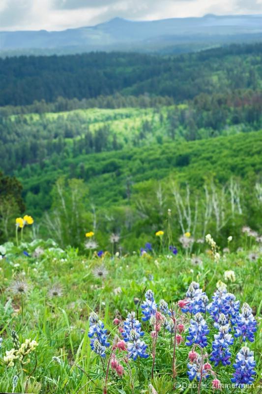 Cement Ridge-Lupin to Black Hills ridges