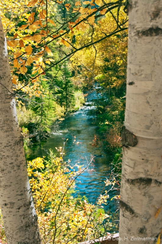 Spearfish Creek Through the Autumn Aspens