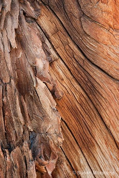 Ancient Bristlecone Pine Bark 6413