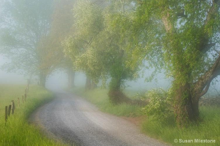 Cades Cove Trees Foggy Morning