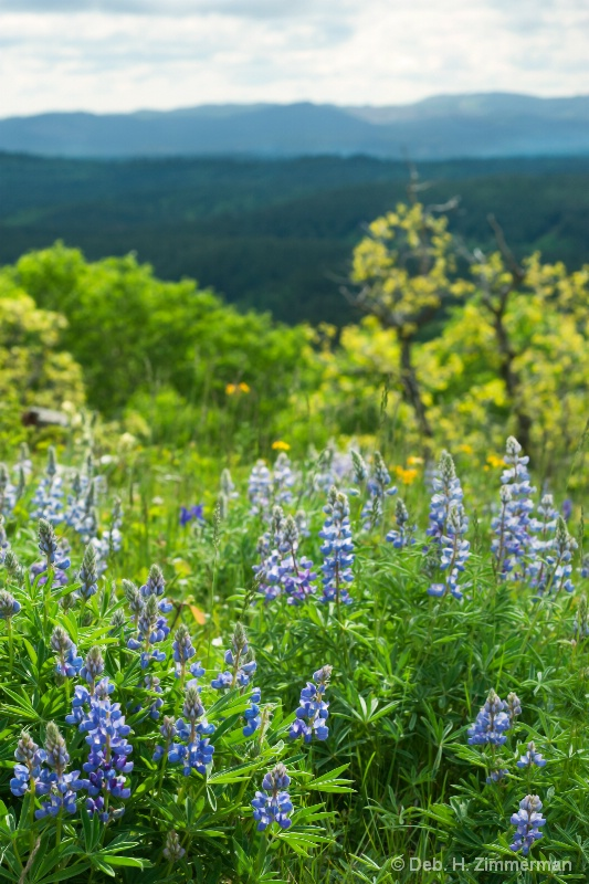 Backlit Lupine and Across the Hills