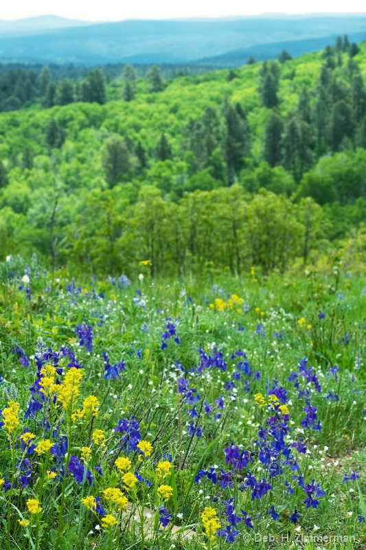 wildflowers in the nothern hills