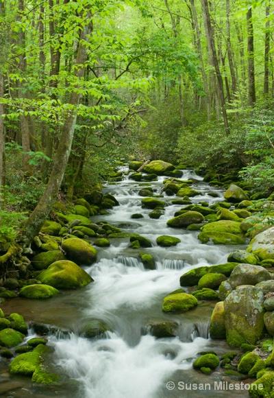 Roaring Fork Stream 4256