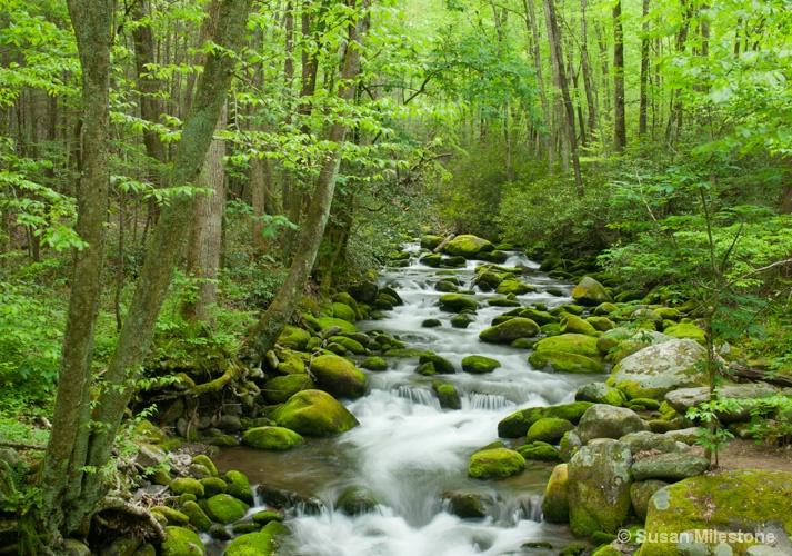 Roaring Fork Stream 4259