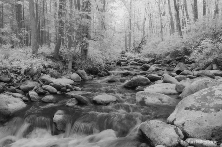 Roaring Fork IR Stream 8292