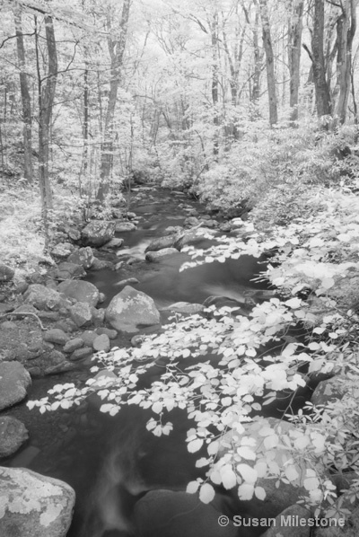 Roaring Fork IR Stream 8831