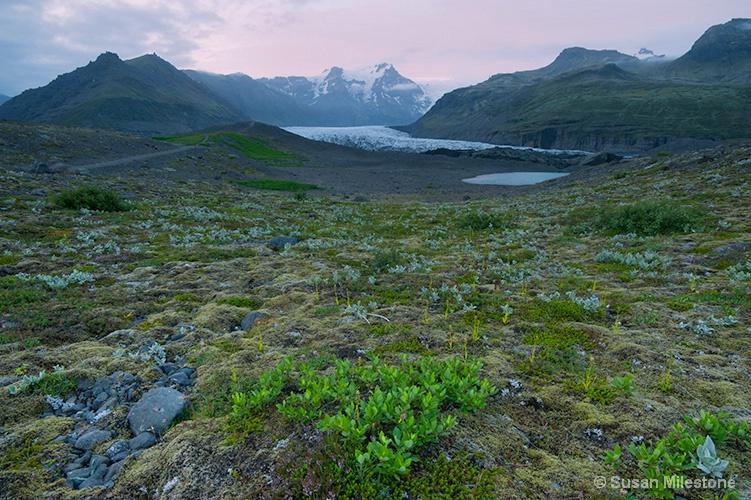 Alpine Field Glacier 3444