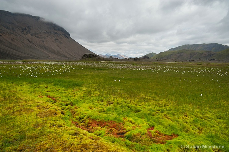 Colorful Moss & Mtns 3031