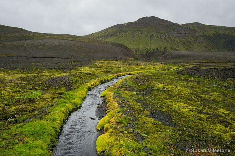 Mossy Stream 2986