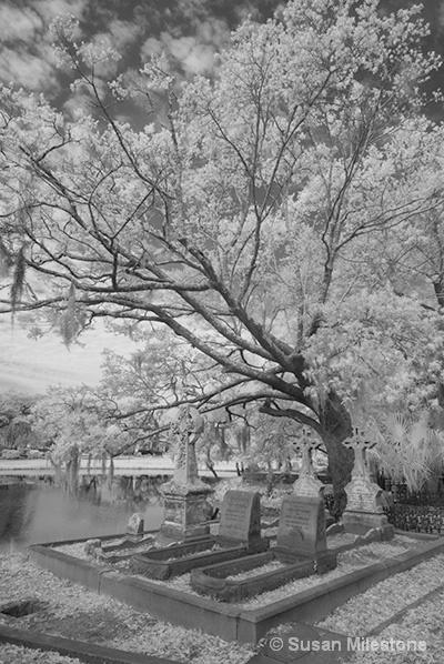 Magnolia Cemetery IR 8667