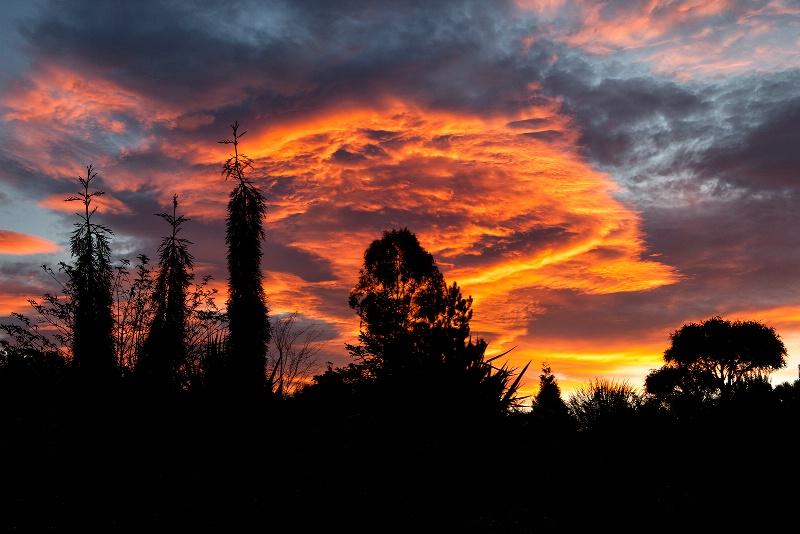 Sara's Garden Sunrise