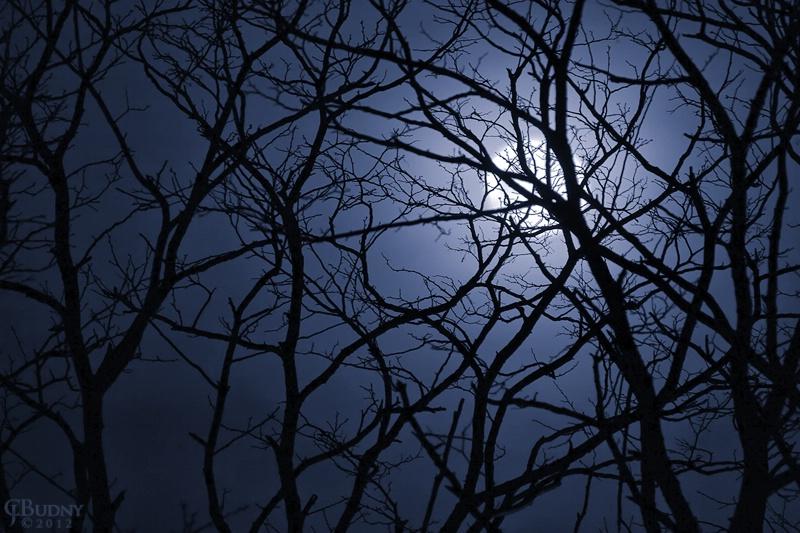 Entangled Moon