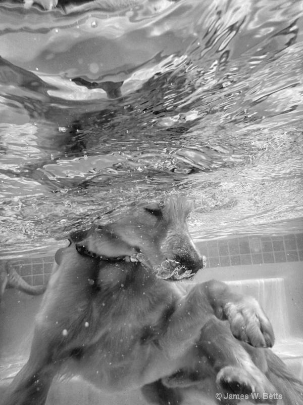 Underwater Marley II
