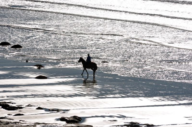 Sea Horse on Glass Beach
