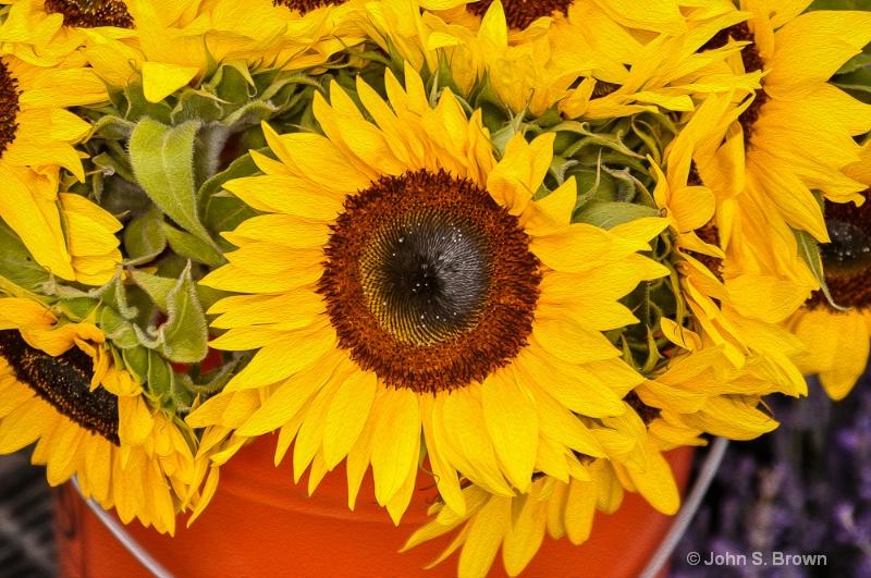 Pail of Sunshine-