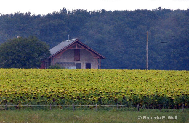 house and sunflowers