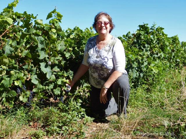 joan and grapes