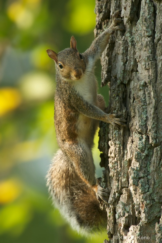 Strong Handsome Squirrel