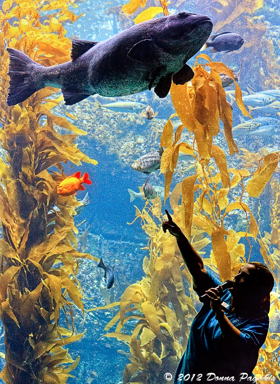 Education About the Kelp Forest