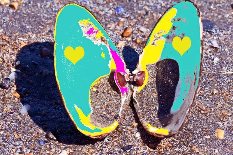 Yellow Heart Clamshell Butterfly