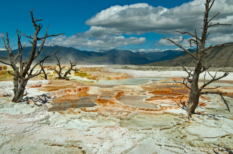 Mammoth Hot Springs.