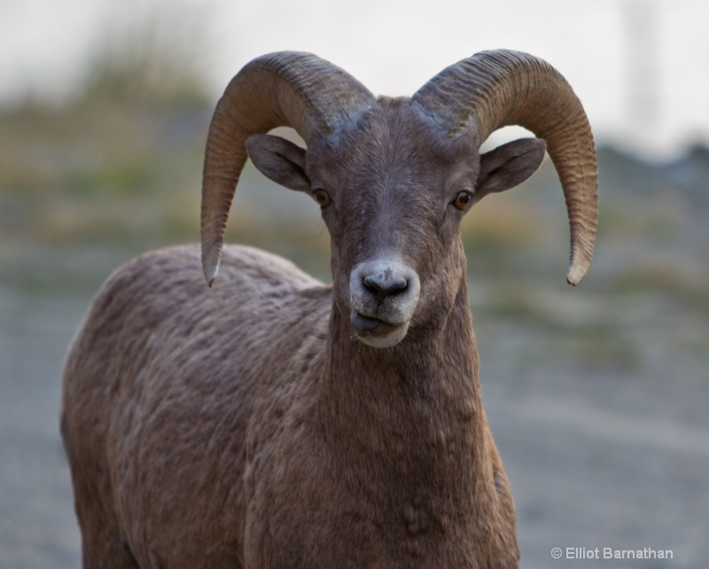 Montana Wildlife 2