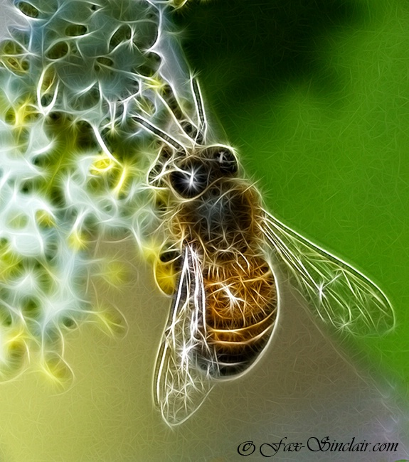 New Bee Magic