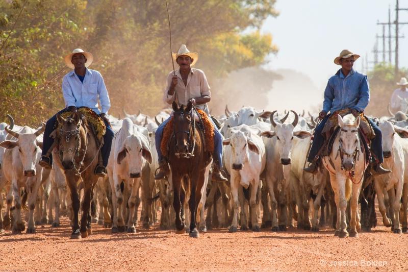 Pantaneiros Driving Cattle