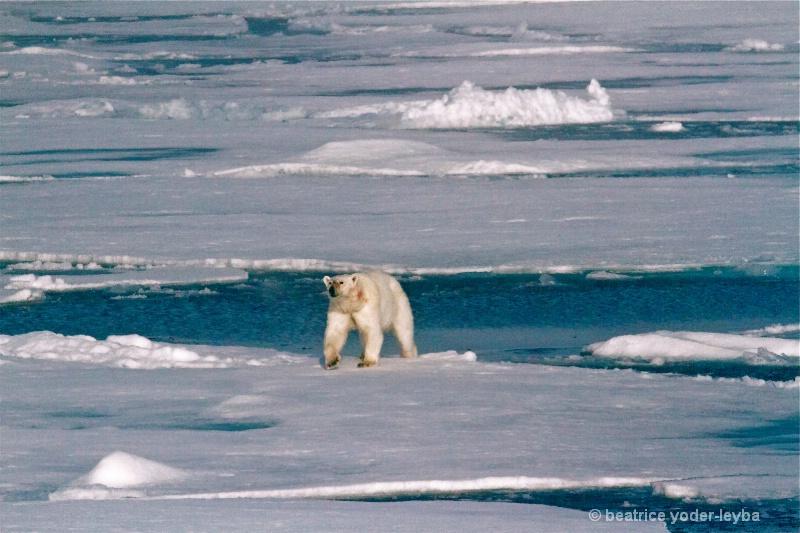 2011 arctic trip - 058