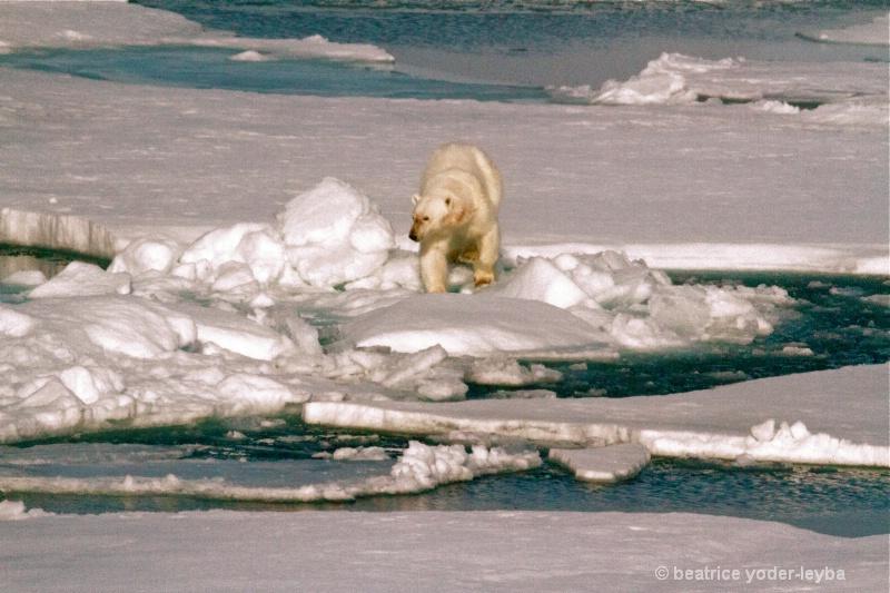 2011 arctic trip - 061
