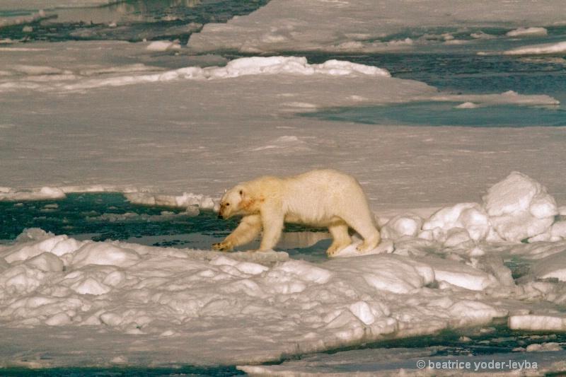 2011 arctic trip - 062