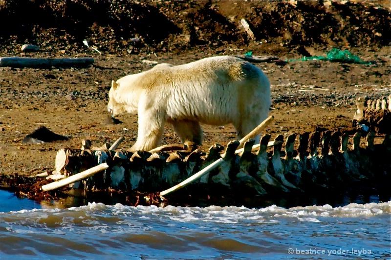 2011 arctic trip - 079