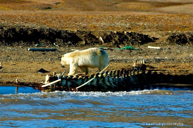 2011 arctic trip - 081