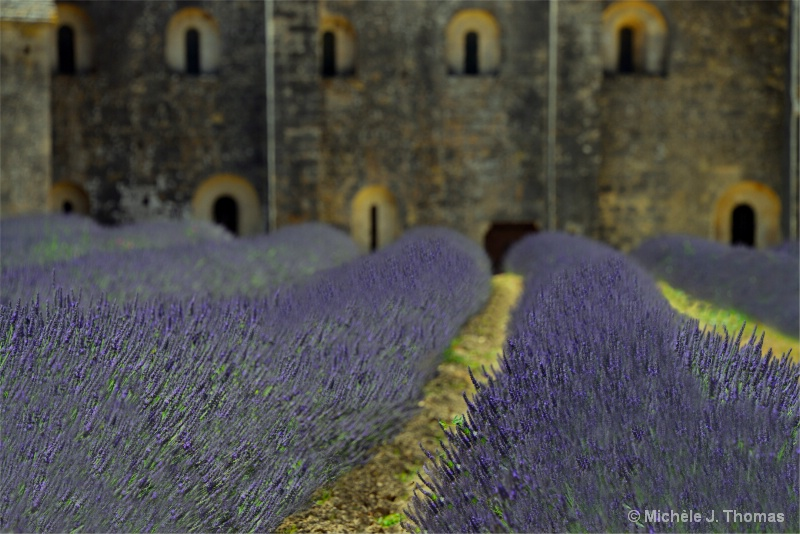 Lavender Fields Near Provence, France