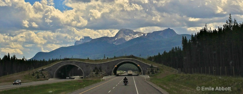 "Banff National Park ""Animal Overpass"""