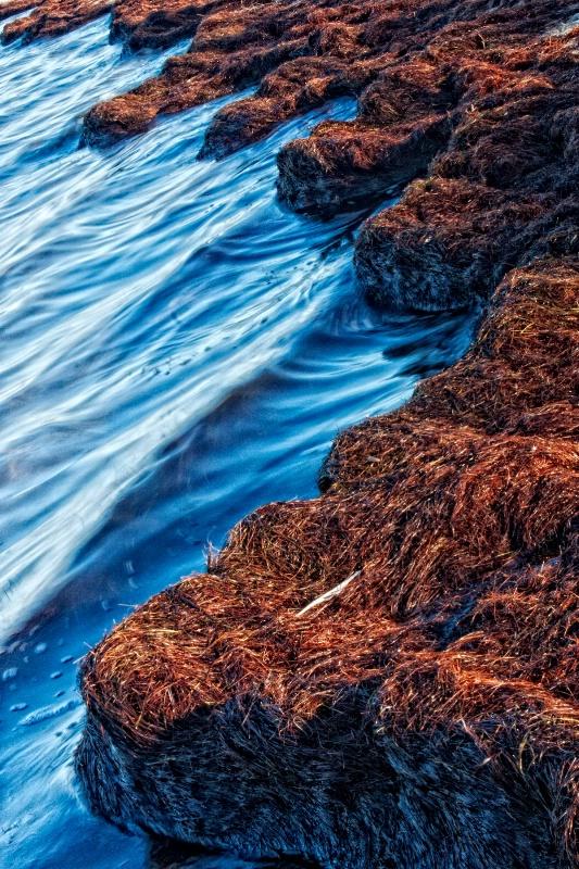 Sea Grass Shore