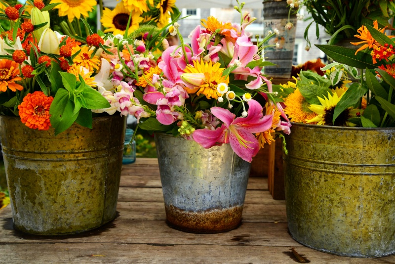 Buckets of Blooms