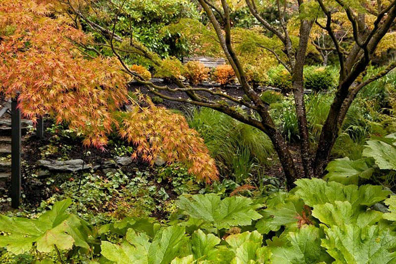 Bellingham Garden