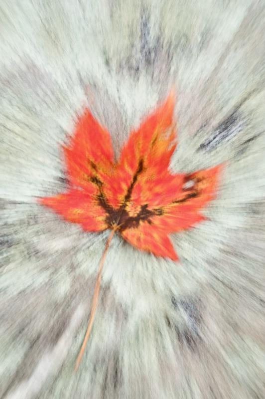 Fall Leaf Zoom