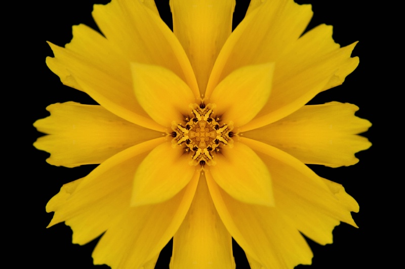 HdG Yellow Flower -- Kaleidoscope