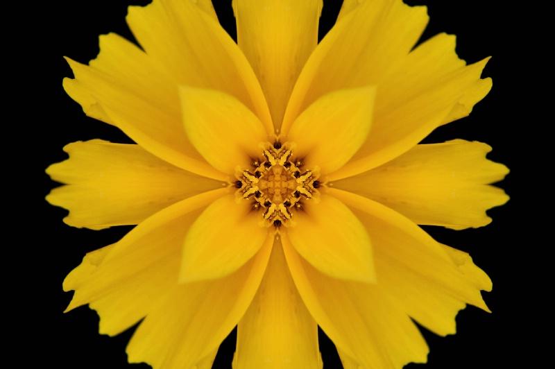 HdG Yellow Flower -- Kaleidoscope