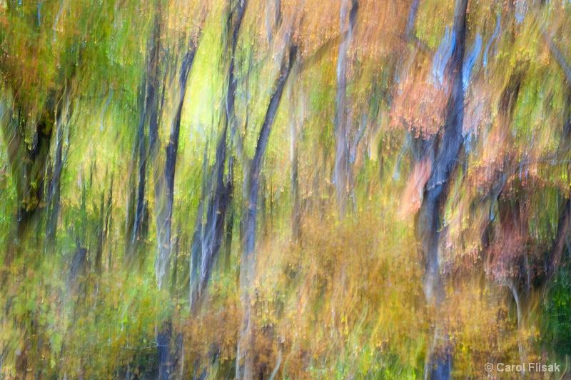 Forest Fairyland