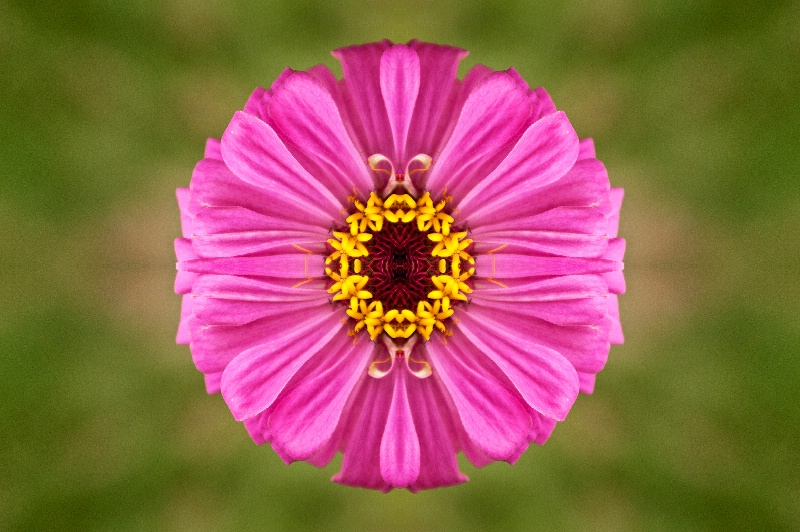 Luray Pink Flower -- Kaleidoscope