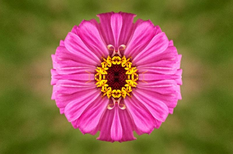 Luray Pink Flower -- Kaleidoscope