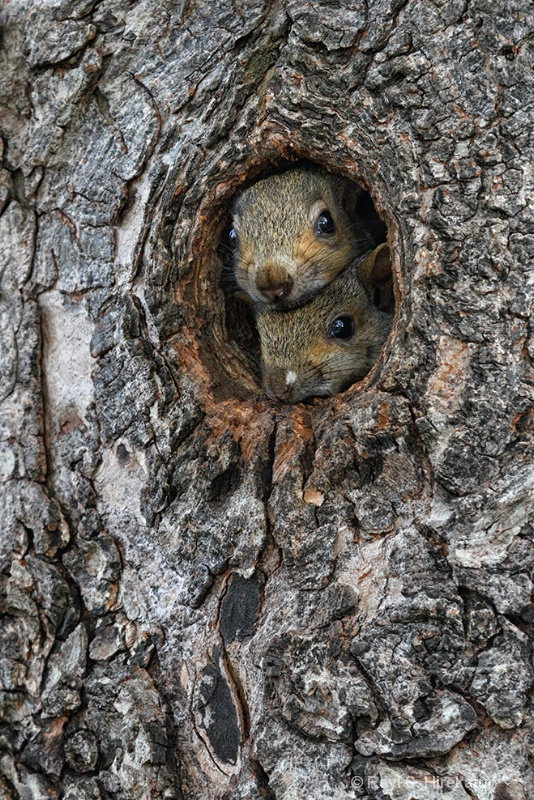 Curious baby squirrels