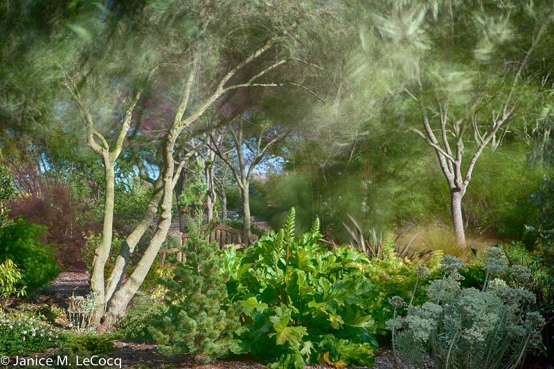 Windy Garden #1