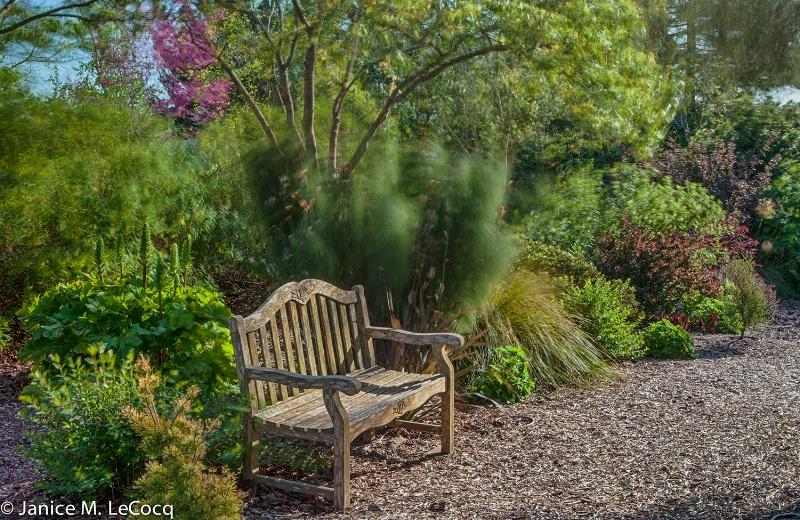 Windy Garden #2