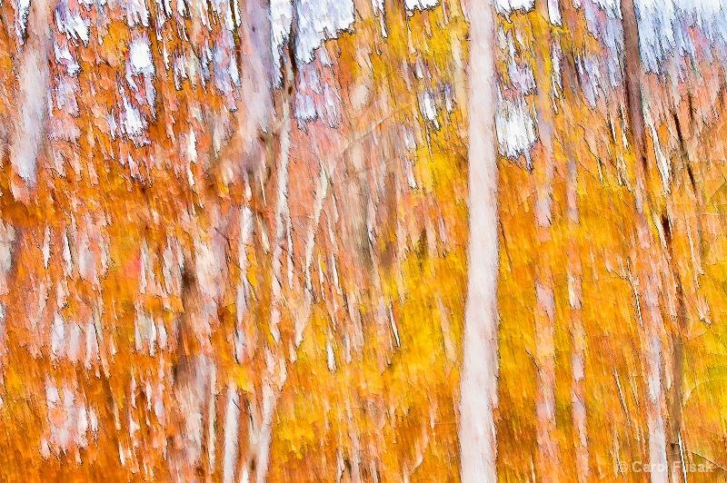 White Birch Abstract