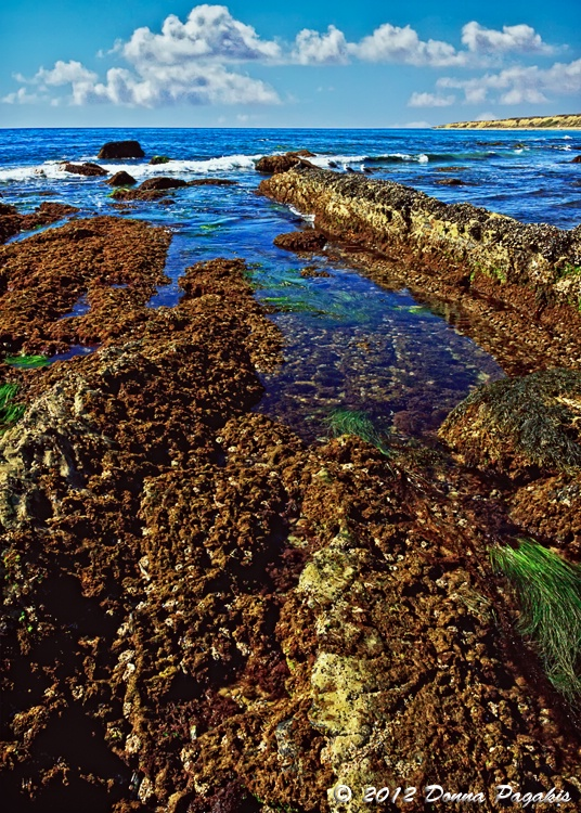 Sensational Tide Pools